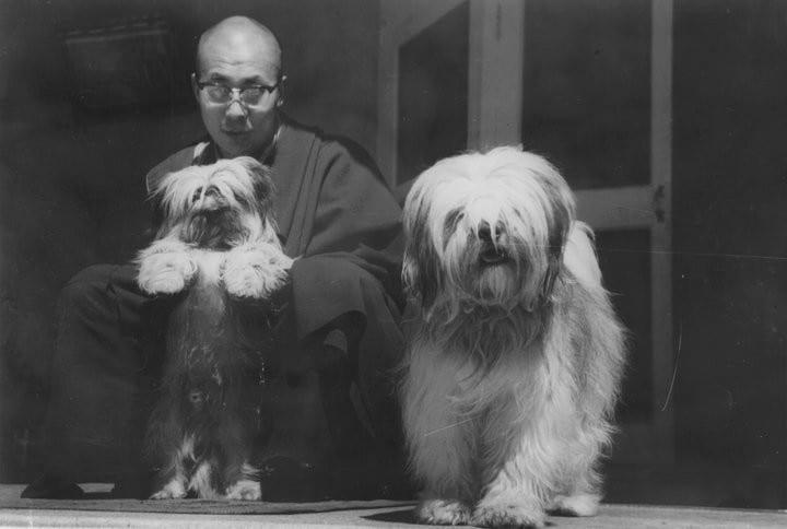 Dalai Lama - Famous Personalities  Shih Tzu