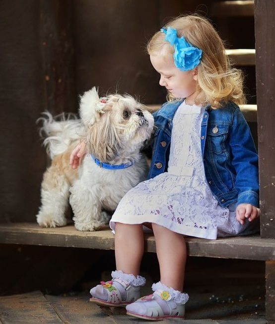 friendly - Facts about your loving Shih Tzu!