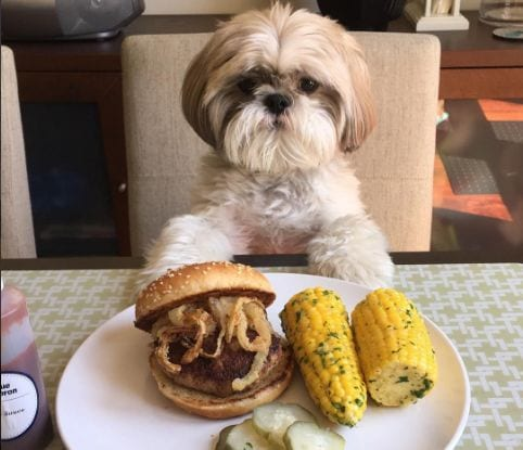 Saying NO to treats and food-signs of Shih Tzu depression
