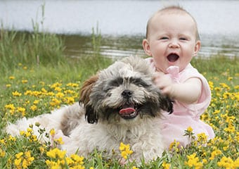 Why Shih Tzu Is A Must For Your Children