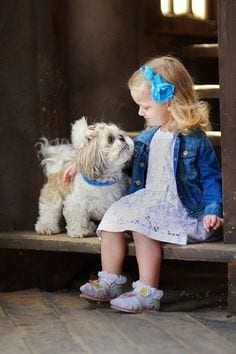7 Reasons Why Shih Tzu Is A Must For Your Children Page 2 Of 4