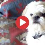 dog hates farts