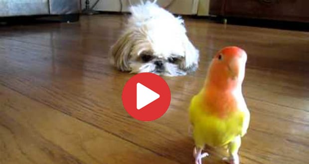 dog and bird friends