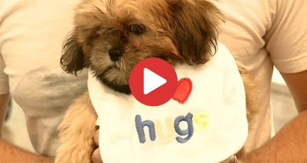 Do Shih Tzu Like Hugs