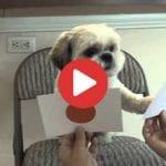 smart puppy identifies colors