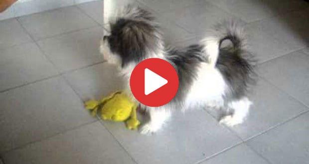Interactive Puppy