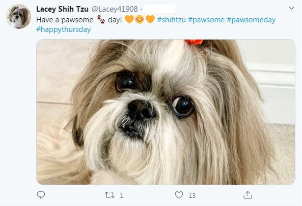 Top 10 facts about Shih Tzu