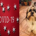 Dogs and COVID-19