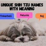 Unique Shih Tzu Names with Meaning