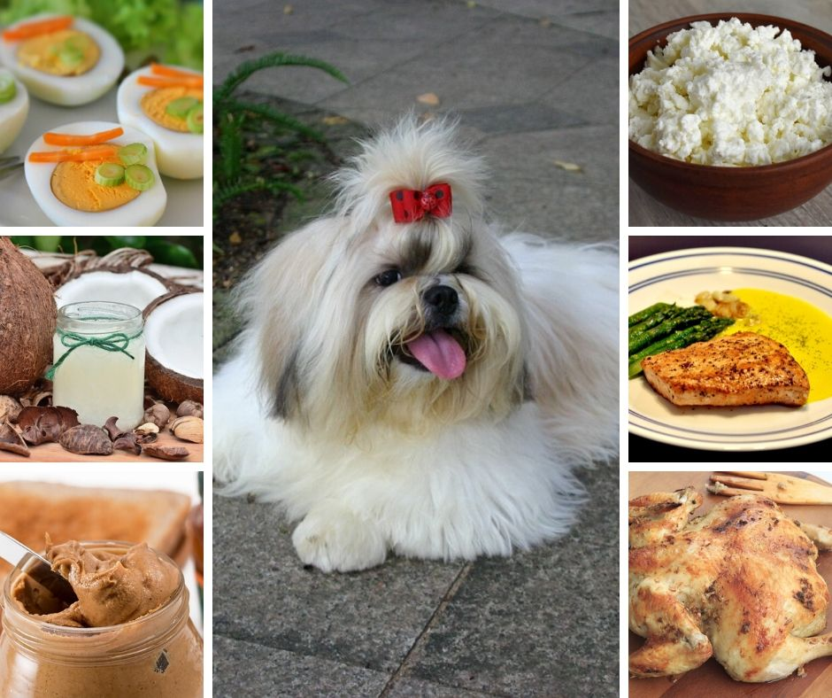 Safe Food for Shih Tzus