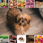 Shih Tzu Food Don'ts