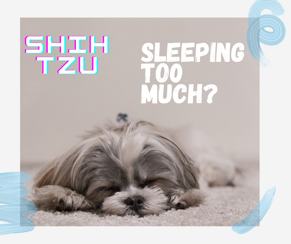 shih tzu sleeping to much