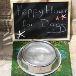 Dog Food Happy Hour