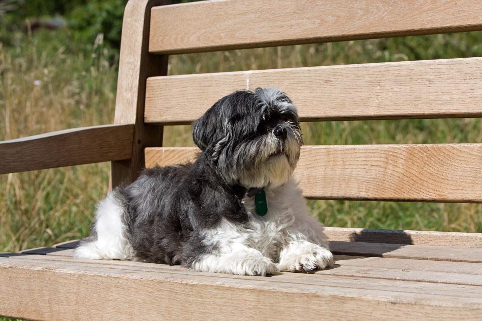 Cute Dog Mixes with Shih Tzu Sitting