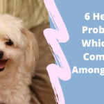 6 Health Problems Which are Common Among Shi Tzu