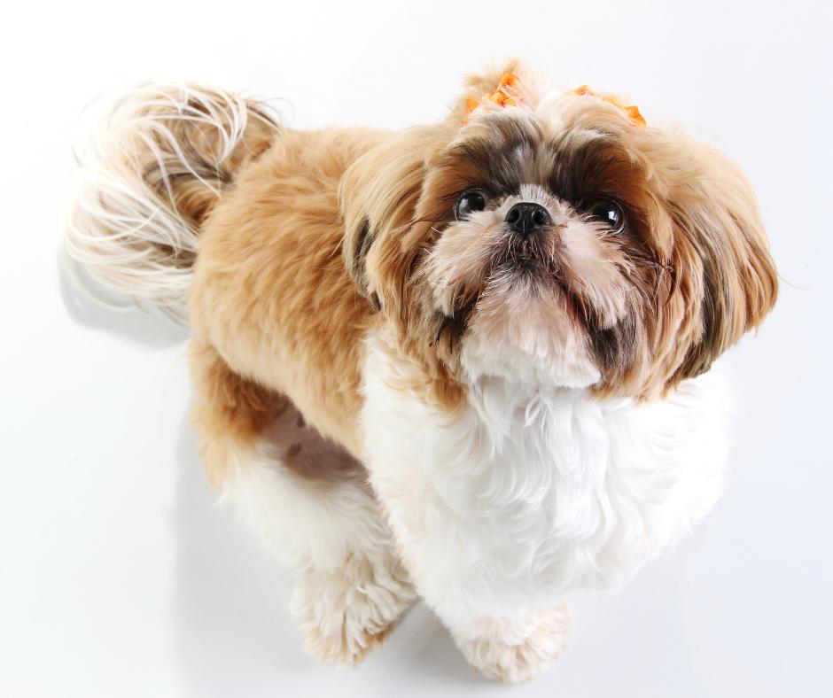 disciplining your dog