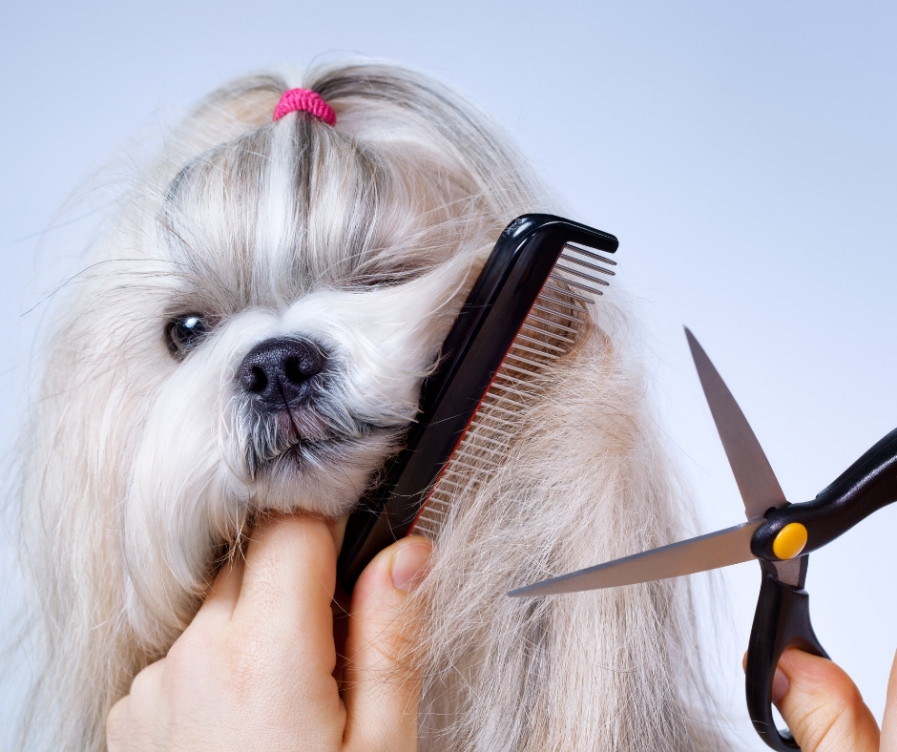 Grooming Your Shih Tzu more