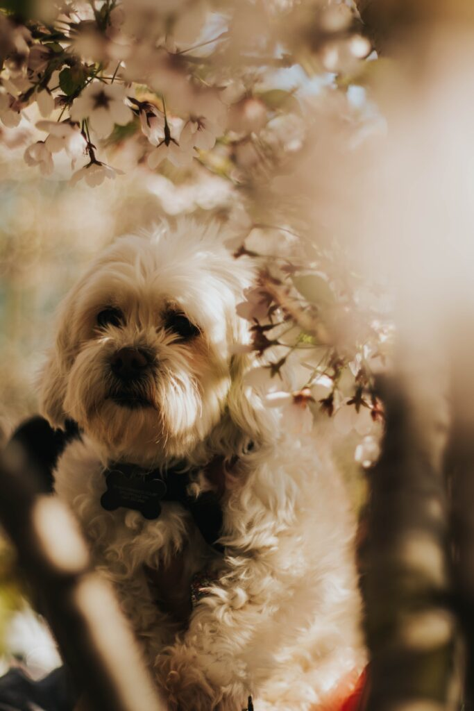 Dog Foods for Shih Tzus with Allergies