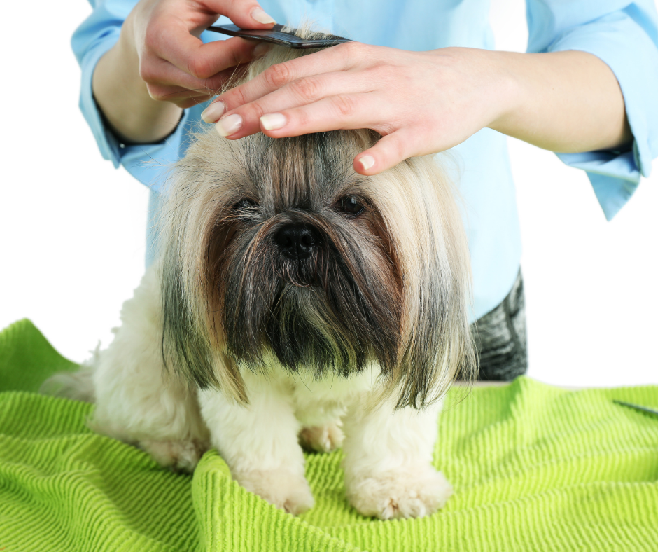 Grooming Tools for a Shih Tzu