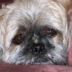 dog Pet Insurance